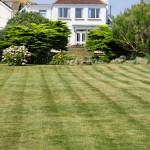 grass-220465