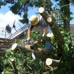storm debris, tree removal,